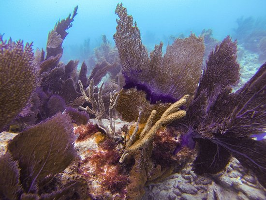 Sombrero Reef: Wide variety of coral