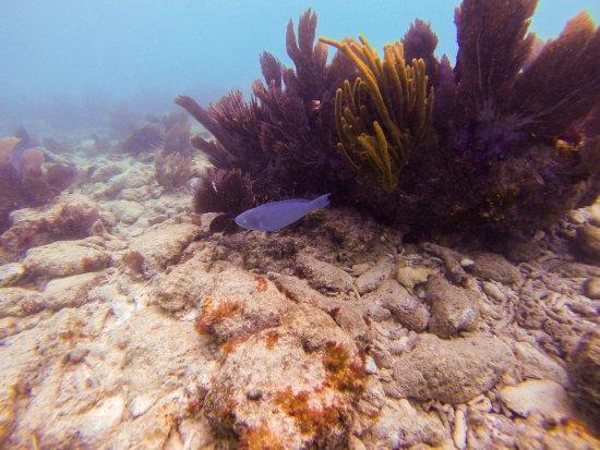 Sombrero Reef: Wide variety of sea life