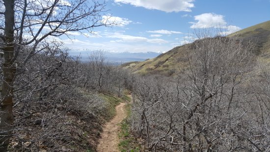 Red Butte Garden: one of the many trails