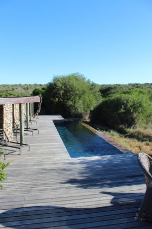 Foto de Kwandwe Private Game Reserve