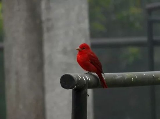 Villa Blanca Cloud Forest Hotel and Nature Reserve: Birdwatching tours everydays 6:30 AM