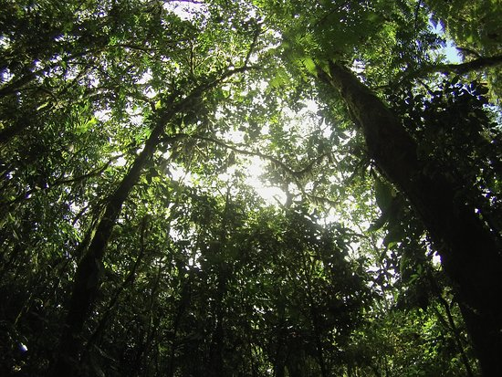 Villa Blanca Cloud Forest Hotel and Nature Reserve: Self Guided Nature Walk