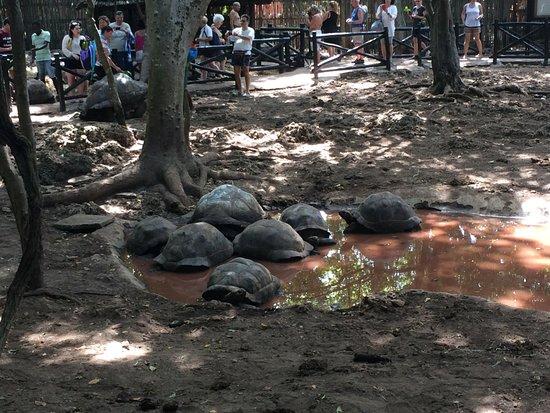 Prison Island: A bagno nel fango...
