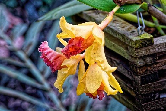 Jardin Botanico Santa Cruz: Orchidarium