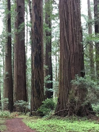 Historic Requa Inn: Redwoods