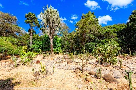Jardin Botanico Santa Cruz: Cacti Garden
