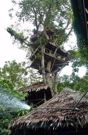 La Casa Fitzcarraldo: Das stabile Baumhaus mit 4 Etagen und Hängematten. Toller Ausblick über die ganze Gegend.