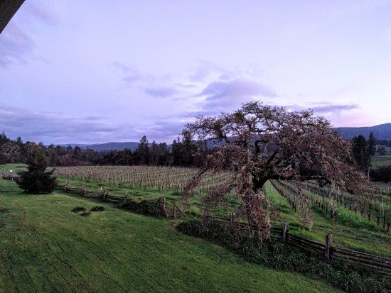 Handley Cellars Winery: End of winter, welcome spring 2017 - Handley sunset!