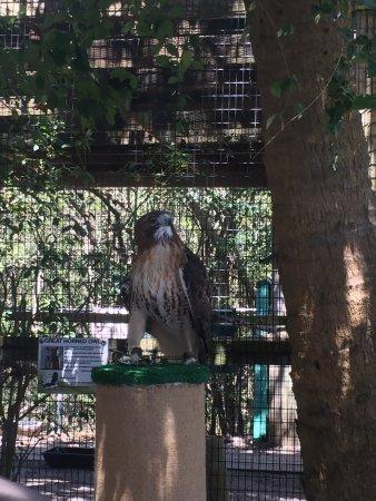Peace River Wildlife Center: photo0.jpg