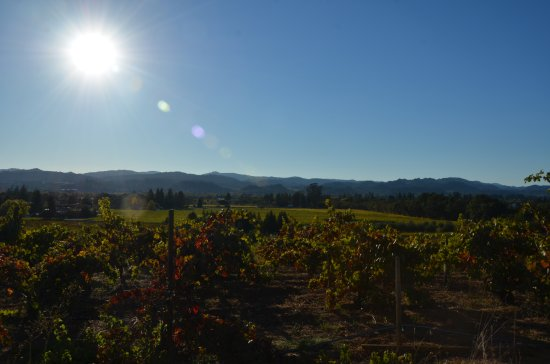 Healdsburg, Californië: Christopher Creek Winery