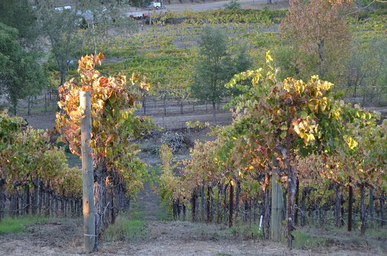 Healdsburg, Califórnia: Christopher Creek Winery