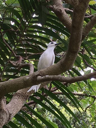 Ebbtide Apartments: Lovely White Tern in the garden