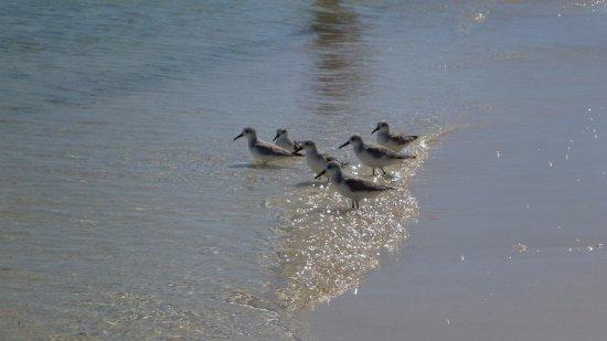 Bahia Honda State Park and Beach: baby birds