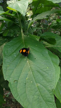 Butterfly Haven: the butterflies are all colors and sizes