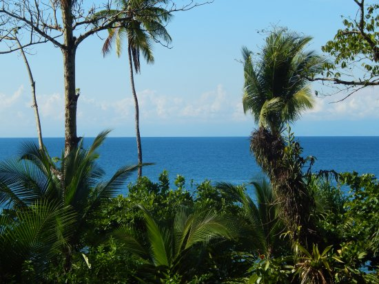 Copa de Arbol Beach and Rainforest Resort: View from our balcony