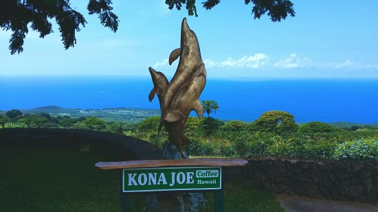 Kealakekua, HI: Beautiful day Kona Joe Coffee Farm.