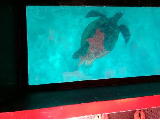 Marine Adventures: Glass bottomed boat turtle viewing.