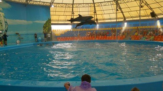 This photo of Dolphins Bay Nemo Phuket is courtesy of TripAdvisor