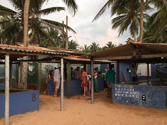 Kosgoda Sea Turtle Conservation Project: photo0.jpg