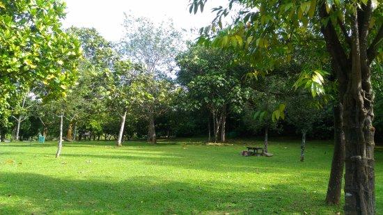 Putrajaya Wetlands Park Foto