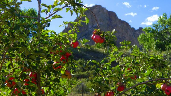 Rock Ledge Ranch Historic Site: An apple orchard inside Rockledge