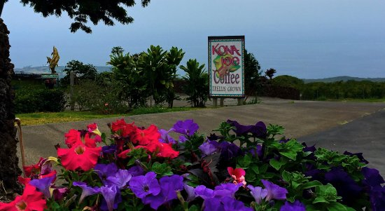 Kealakekua, HI: Beautiful coffee farm