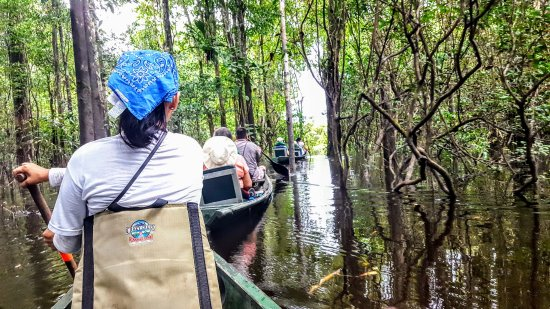Amazonia Expeditions' Tahuayo Lodge: Canoeing through flooded forest