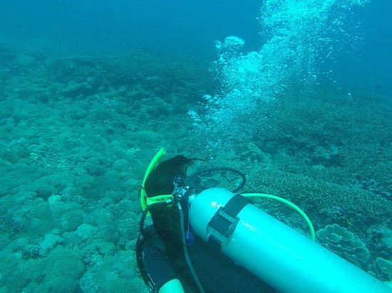 Zdjęcie Blue Marlin Dive Gili Trawangan