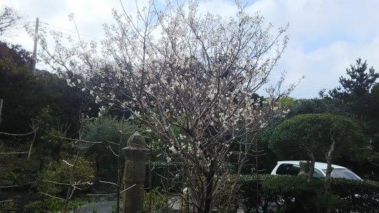 Blanc Blue Nagomi : 花が咲いていました。桜かな?