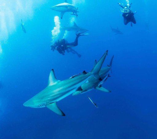 Protea Shark Divers