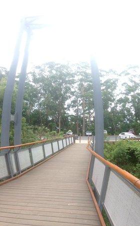 Korora, Australia: Skybridge
