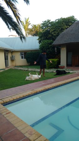 Kududu Guest House: the two dogs follow you all around