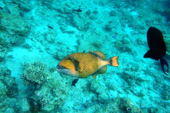 Ellaidhoo Maldives by Cinnamon صورة فوتوغرافية