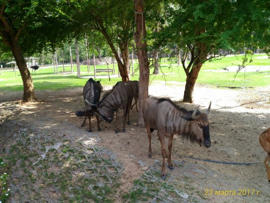 Khao Kheow Open Zoo: Рогатые