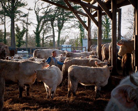 la ferme et ses charolaises