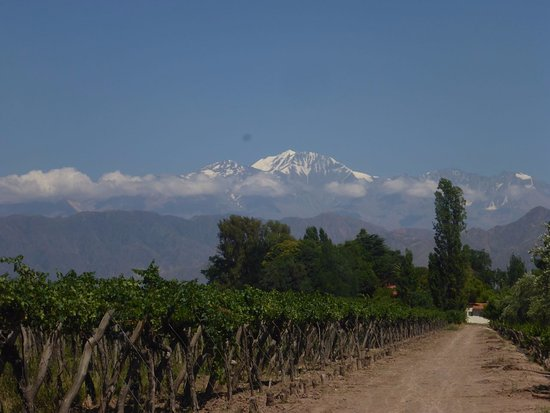Kaiken Winery: Andes in the background
