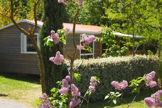 Bungalow /Mobil home bois au camping à Riez