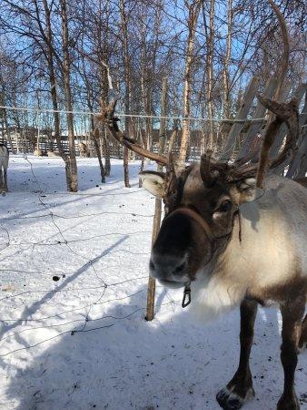Sámi Siida - Márkanbáiki : photo1.jpg