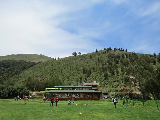 Sicuani, Perú: 裏は牧場みたいになっています。