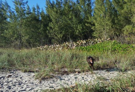 Jensen Beach, Floryda: Dune Dog