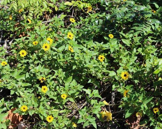 Jensen Beach, Флорида: Flowers