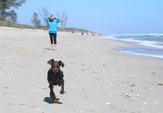 Jensen Beach, FL: Run Xena Run