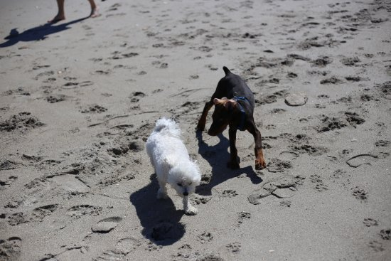 Jensen Beach, Флорида: Friendlys