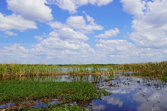 Spirit of the Swamp Airboat Rides: beautiful lake on a perfect day