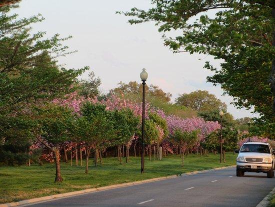 Potomac Park: Late Spring flowers