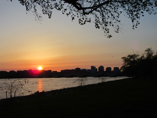 West Potomac Park has great view the river and high rises in Virginia