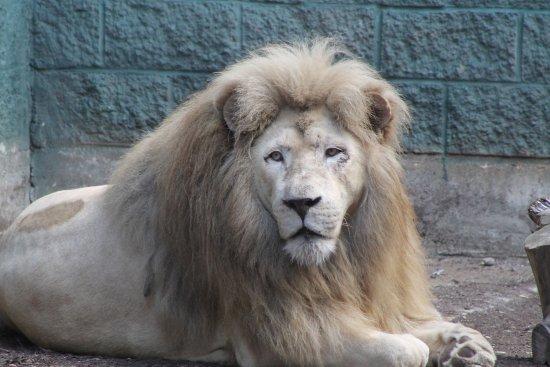 Attleboro, MA: Capron Park Zoo