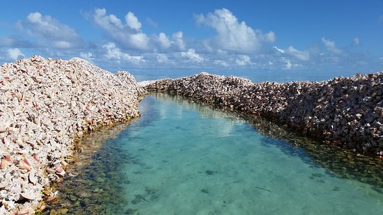 Horseshoe Reef
