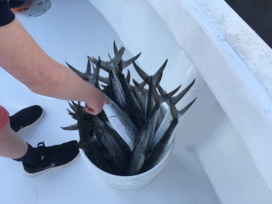 Loads of fish picture of captain mike charters panama for Captain anderson deep sea fishing