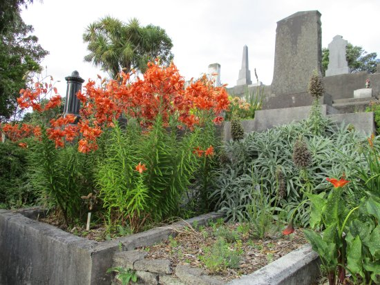 นิวพลีมัท, นิวซีแลนด์: early February - tiger lilies